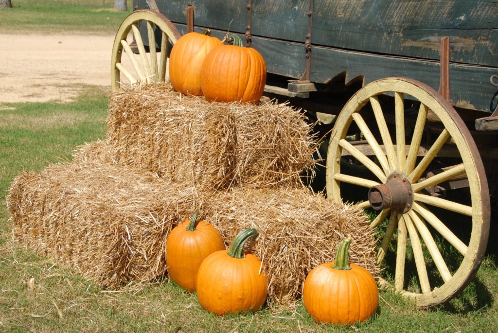 Create your Fall bucket list with these 107 fun Fall activities. They include indoor and outdoor Fall activities, and fall activities for couples.